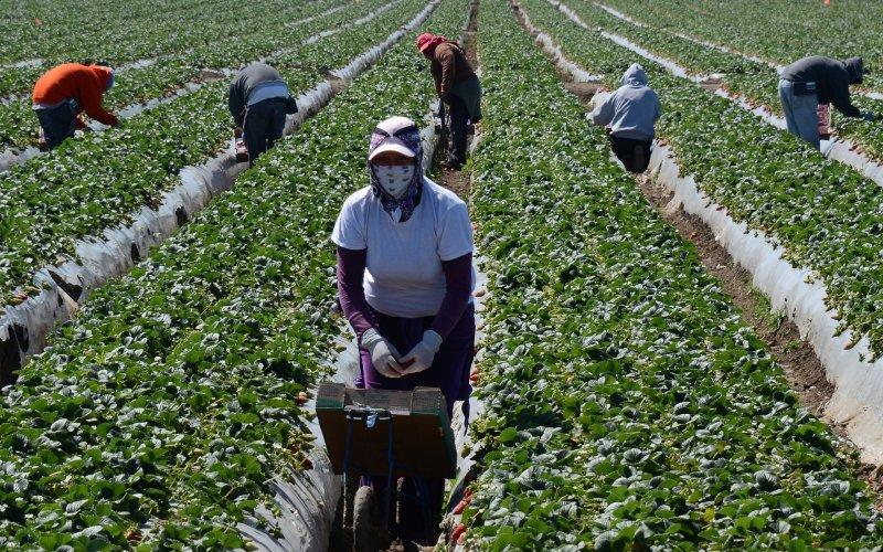 agricoltori stranieri